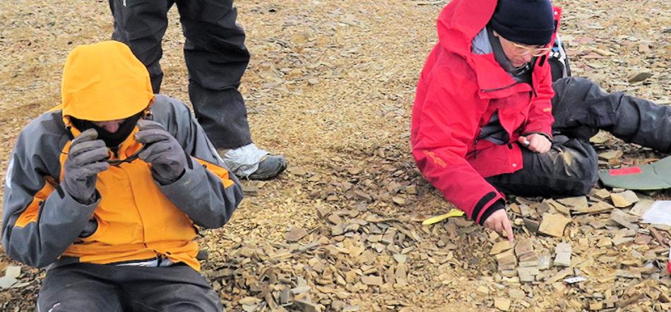 Die Forscher fanden neben den versteinerten Saurierresten auch eine Vielzahl von verschiedenen Organismen aus derselben Zeit, darunter Fische, Muscheln und Ammoniten. Bild: CTyS