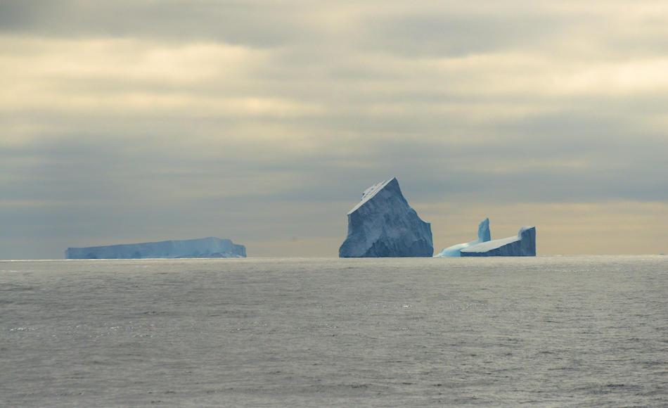 Das Südpolarmeer ist nicht eine leere Wasserwüste. Unter der Oberfläche treiben unzählige kleine Organismen in den produktivsten Zonen der Welt. Dazu gehören vor allem Flokrebse und Krill. Bild: Michael Wenger