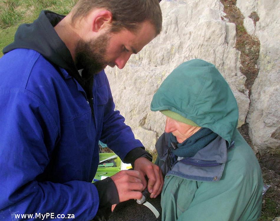 Jonathan Handley (links) markiert einen Pinguin und befestigt mit Hilfe einer Assistentin von Falkland Conservation eine Minikamera am Kopf. Bild: Jonathan Handley / My Port Elizabeth