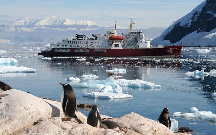 Polarstar-Pinguine
