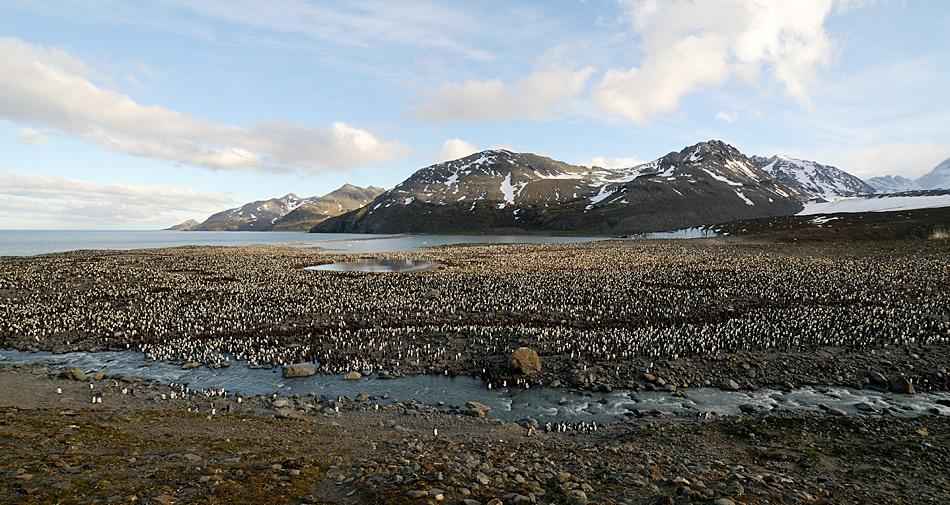 Südgeorgien liegt mitten im Südatlantik und ist britisches Überseegebiet, verwaltet von den Falkland-Inseln aus. Es gilt als eines der grössten Tierparadiese in dieser Region.