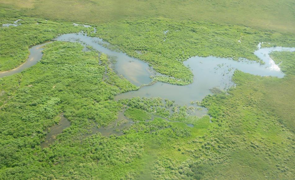 Die flachen Tundragebiete im Beringmeer sind im Sommer von Flüssen und kleinen Seen durchzogen, die mit der Zeit austrocknen. Biber sind im Zuge des Klimawandels in diese Regionen eingewandert und deren Seen trocknen auch im Sommer nicht aus. Das verändert das Gesicht der Tundra nachhaltig. Bild: Michael Wenger