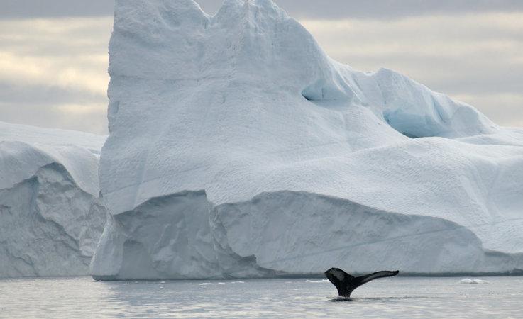 Die Baffin Bay, die zwischen Kanada und Westgrönland liegt, ist ein bekanntes und beliebtes Ziel