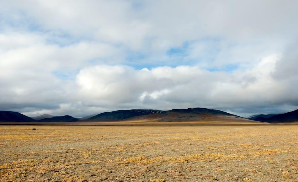 Das Aussehen der Beringia-Region zeigt sich auch heute noch auf Wrangel Island, gemäss der allgemeinen Meinung der Forscher. Eine trockene und kalte Landschaft mit niedriger Vegetation und reichhaltiger Tierwelt. Bild: Michael Wenger