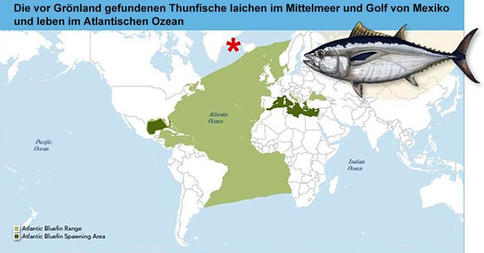 Verbreitungs- und Laichgebiet der Blauflossenthunfische